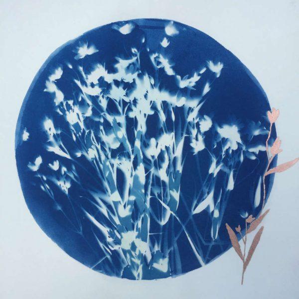 shadow blue white wild flower